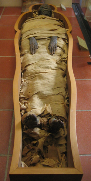 Egyptian mummies were much sought after by museums in the 19th and early 20th centuries. This Egyptian mummy is kept in the Vatican Museum. Source: Joshua Sherurcij. Courtesy Wikimedia Commons.