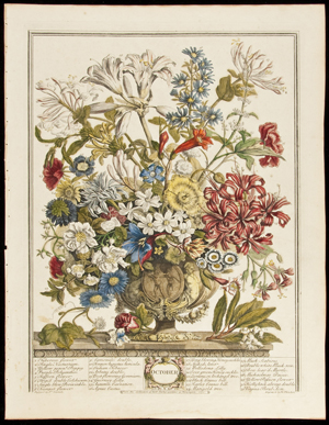 Robert Furber, nurseryman and gardener at Kensington, has the honor of having his name on 'Twelve Months of Flowers,' a set of 12 hand-colored copper-engraved plates published in 1730. Each print measures 16 inches by 12 inches. The rare set has a $40,000-$50,000 estimate. Image courtesy PBA Galleries.