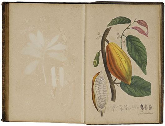 Nees von Esenback, Plantae officinales oder Sammlung officineller Pflanzen. Düsseldorf, Arnz & Co., (1821-1833). Four volumes with 430+ colored lithographs. Adams Amsterdam image.