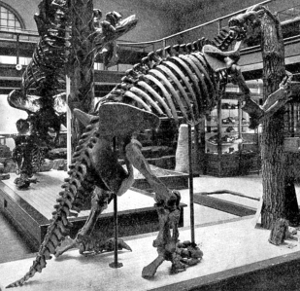Pre-1923 Osborn image of Megalonyx jeffersonii, better known as Jefferson's ground sloth, an extinct species that died out around 10,000 B.C.