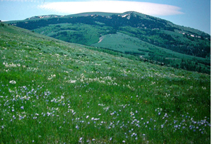 View of landscape typical of Utah land to be auctioned Feb. 22 by Sunny Land. Image courtesy of LiveAuctioneers.com and Sunny Land.