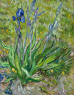 Iris, 1889. Vincent van Gogh, Dutch, 1853 1890. Oil on thinned cardboard, mounted on canvas, 24 1/2 x 19 inches (62.2 x 48.3 cm). National Gallery of Canada, Ottawa.