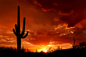 Photo by Saguaro Pictures, licensed under the Creative Commons Attribution 3.0 Unported license.