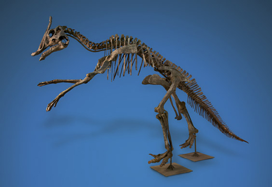 Superb crested Saurolophus angustirostris, Late Cretaceous, Central Asia, a late entry in I.M. Chait's May 6 Natural History sale. Estimate: $150,000-$200,000. I.M. Chait image.
