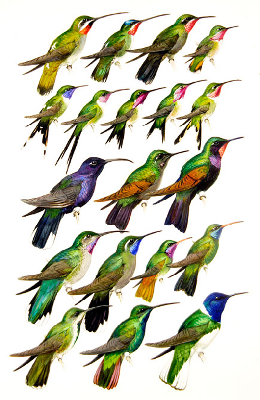 Hummingbirds, by Roger Tory Peterson. Image courtesy of Guernsey's.