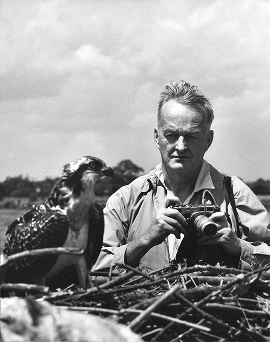 Roger Tory Peterson at work in the field, circa 1961. Image courtesy of Guernsey's.