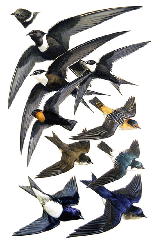 Swifts and Swallows, by Roger Tory Peterson. Image courtesy of Guernsey's.