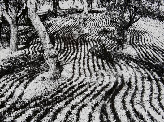 Mario Giacomelli (1925-2000), 'Marzo, Presa di coscienza sulla natura,' 1980 circa. cm 29,5 x 39,5 (11.6 x 15.6 in.). Stampa vintage alla gelatina sali d'argento. Firmata ed intitolata apenna con timbro del fotografo sul verso. Stima €2.000-€3.000. Prezzo di aggiudicazione €2.000. Foto: Minerva Auctions.