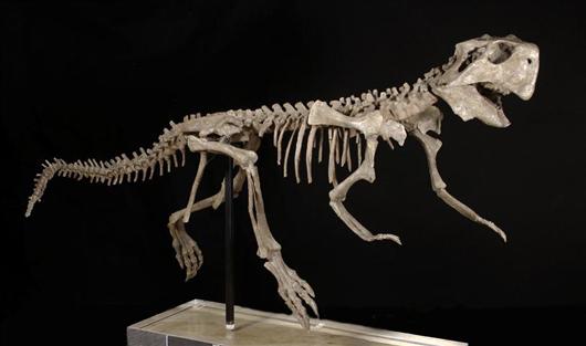 Dinosaur skeleton of psittacosaurus, early Cretaceous Period, 145-66 million years old. Estimate: $10,000-$15,000. Antiquities-Saleroom image.