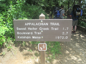 The Appalachian Trail at Newfound Gap in the Great Smoky Muntains National Park. Image by Billy Hathorn. This file is licensed under the Creative Commons Attribution 3.0 Unported license.