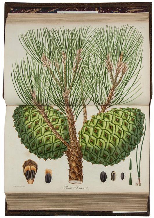 [Forbes (James)] 'Pinetum Woburnense: or, a Catalogue of Coniferous Plants, in the collection of the Duke of Bedford, at Woburn Abbey,' first edition, one of 100 copies, signed presentation copy from the Duke of Bedford, 1829. Estimate: £3,000-4,000. Bloomsbury Auctions image.