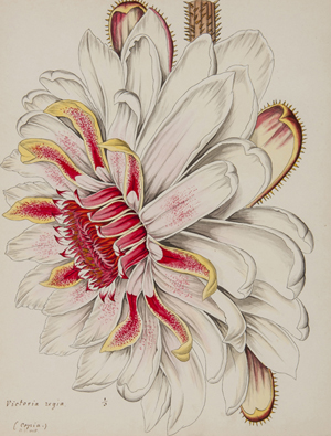 Sievert (August, 1820-1840), 'Florilegium,' collection of over 1,100 fine original watercolor botanical drawings, c. 1840. Estimate: £20,000-25,000. Bloomsbury Auctions image.