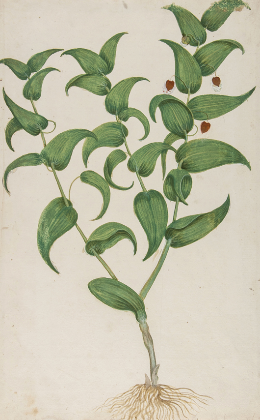Italian School, 18 botanical watercolors, early 17th century, Estimate. £5,000-7,000. Bloomsbury Auctions image.