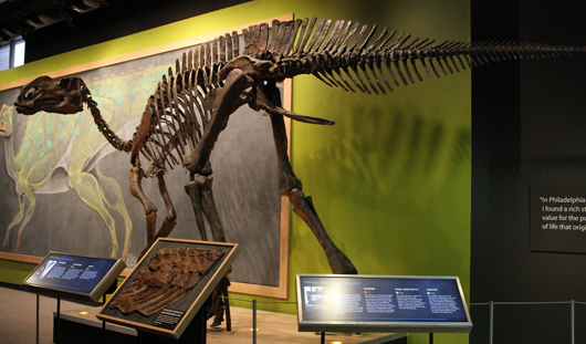 Reconstruction of a Hadrosaurus foulkii at the Academy of Natural Sciences of Drexel University, Philadelphia. Image by Jim the Photographer of Springfield, Pennsylvania; licensed under the Creative Commons Attribution 2.0 Generic license.