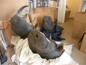 As part of Operation Crash, federal agents raided a New York apartment and seized four black rhinoceros mounts, three of which did not have horns and one that had fake horns attached. Photo courtesy of United States Attorney's Office, Southern District of New York.