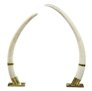 Pair of large mid-20th century African ivory elephant tusks, 60 inches tall and 79 1/2 inches long. Crescent City Auction Gallery LLC image.