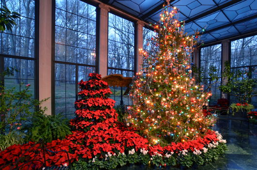A giant live Christmas tree is erected every year in the Museum Conservatory at Winterthur, in keeping with a practice started by Winterthur's founder Henry Francis du Pont. Du Pont would always buy a live tree from a local farm, a tradition that is followed to this day. Image courtesy of Winterthur.