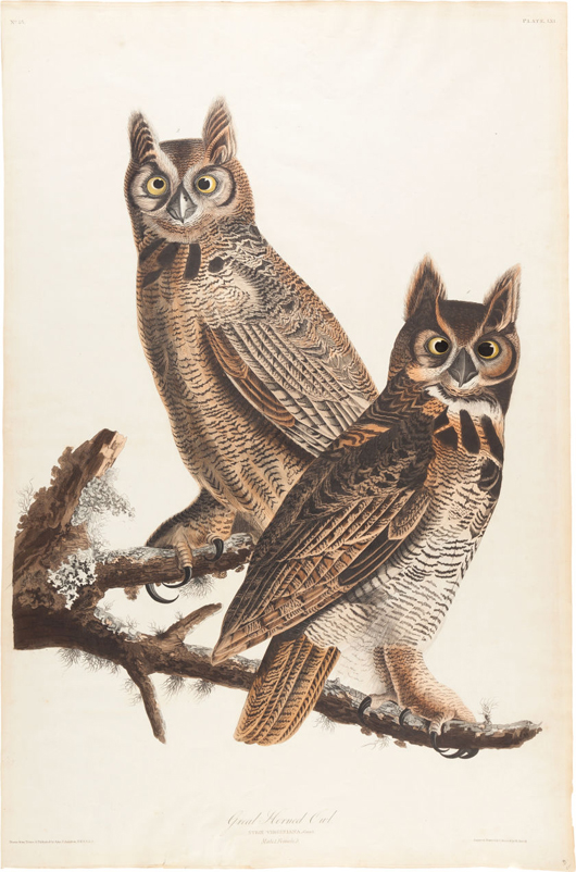 John James Audubon's large hand-colored engraving of the Great Horned Owl- Plate XLI (Havell Edition). Estimate: $12,500-plus. Heritage Auctions image.