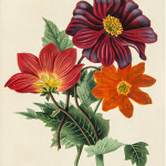 'Studies of Flowers from Nature' (1818) by Miss J. Smith is an attractive volume of 20 hand-colored aquatint plates. Dreweatts & Bloomsbury Auctions image.