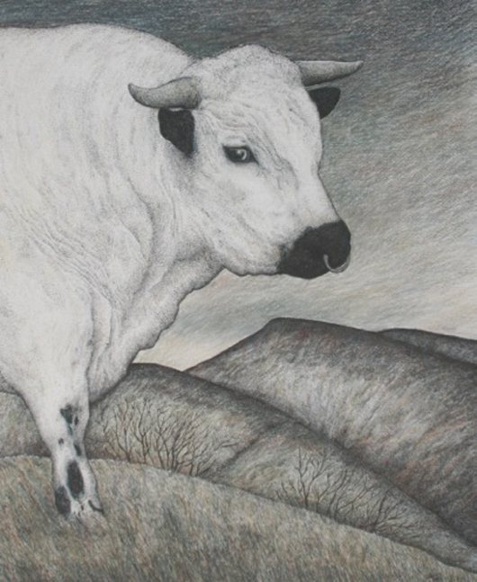 'Chartley Park Bull', a crayon, pen and ink drawing by Seren Bell on view at the Fosse Gallery in Stowe on the Wold, Gloucestershire from June 8 to 28. Image courtesy of The Fosse Gallery.