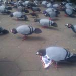 Flash Flock, Tina Trachtenburg, New York City. Photo by Ilana Novick.