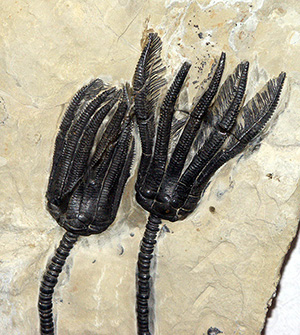 Ancient artifacts, fossils donated to University of Oklahoma