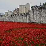 'Blood Swept Lands and Seas of Red,' an installation consisting of ceramic poppies planted in the Tower of London moat, commemorating the centenary of the outbreak of World War I. Image by Yuval Weitzen. This file is licensed under the Creative Commons Attribution-ShareAlike 3.0 Unported license.
