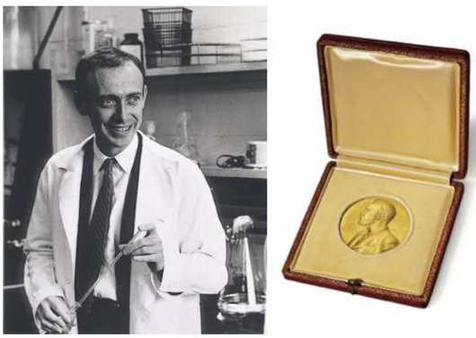 'Practically all the scientific disciplines in the life sciences have felt the great impact of your discovery,' said Professor A. Engström upon presenting the 1962 Nobel Prize to James D. Watson (pictured left, Photo: Science Source ). Image provided by Christie's.