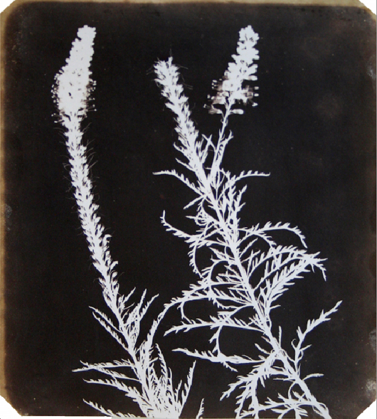 James Hyman Gallery in Savile Row has extended their hugely popular early photography exhibition 'The Age of Salt: Art, Science and Early Photography' until  March 31. The show includes one of William Henry Fox Talbot's greatest works  'Veronica in Bloom' (1840). Image courtesy of James Hyman Gallery.