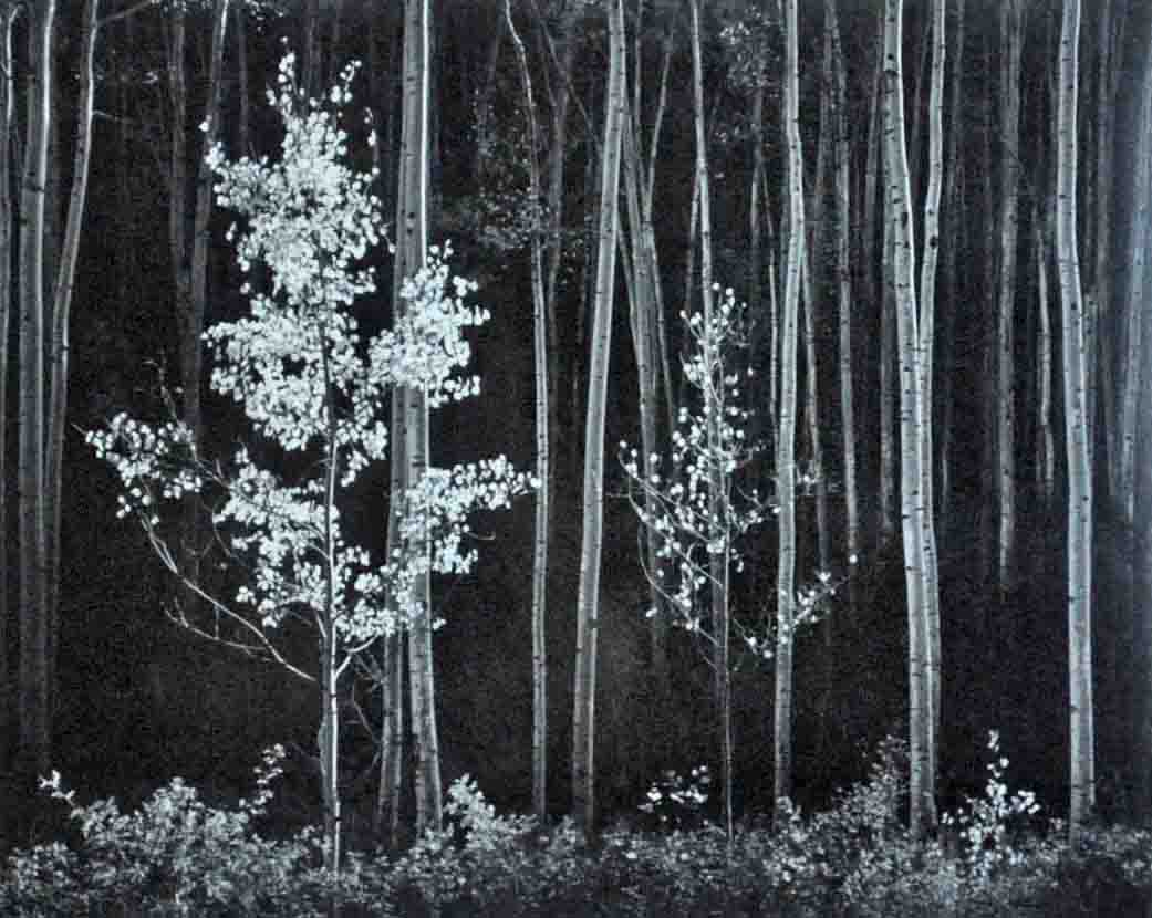 Ansel Adams, 'Aspens, Northern New Mexico, 1958.' Leighton Galleries image
