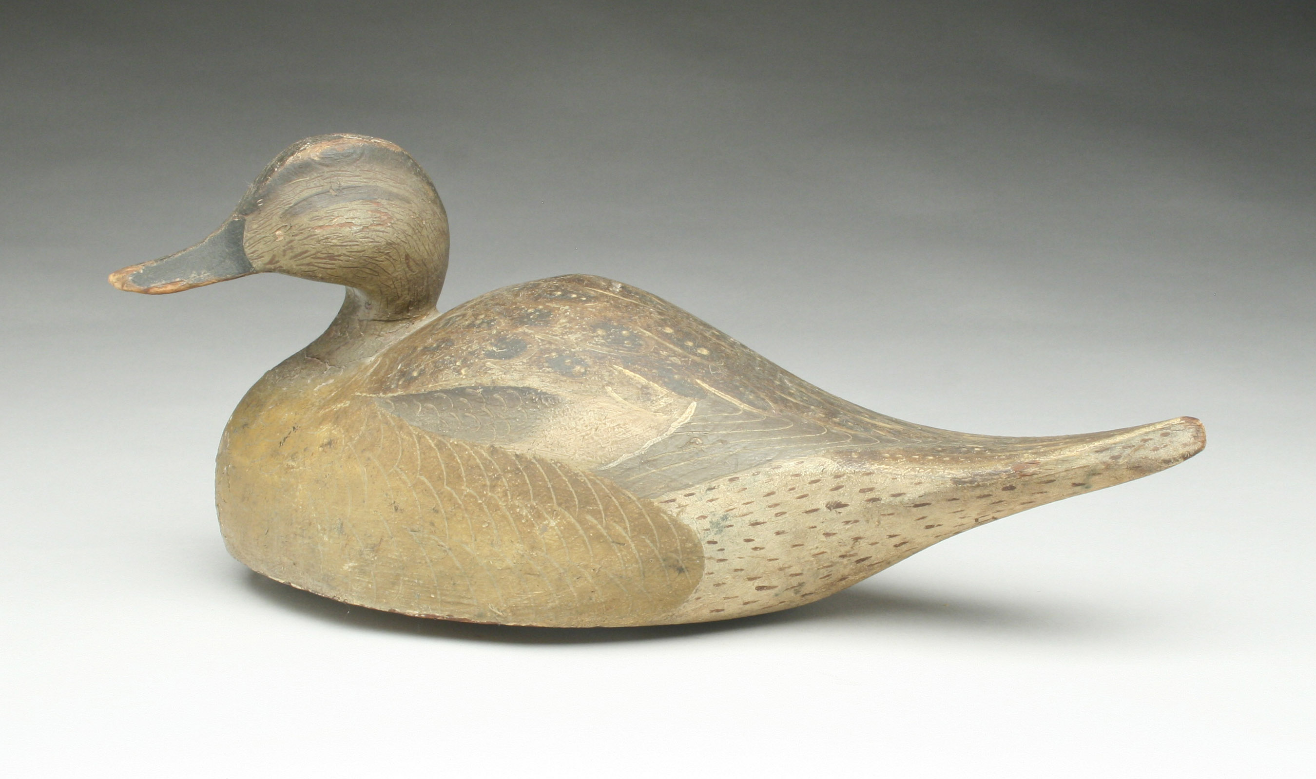 ward-brothers-pintail-hen