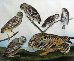 Mid-Hudson Auction Galleries to sell collection of Audubon prints Jan. 21- 22