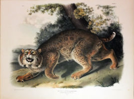 Arader Galleries auction celebrates beauty of nature March 31