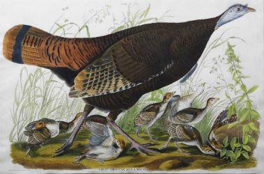 20 Audubon prints lead off Arader Galleries auction June 8