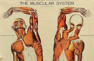Anatomical illustrations: body as art