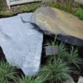 lunar meteorites showcased
