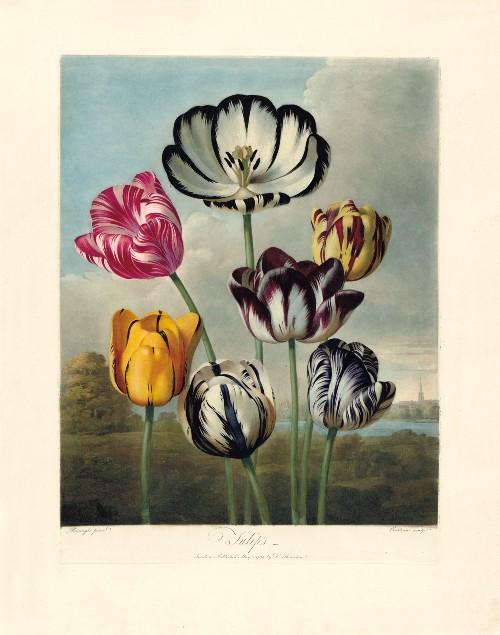 Thornton's 'Temple of Flora'