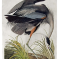 Audubon chart course