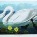 Audubon's 'Birds'