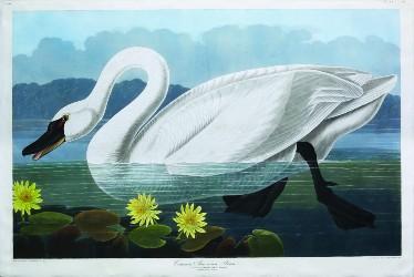 Audubon's 'Birds' flock to Arader auction Oct. 10