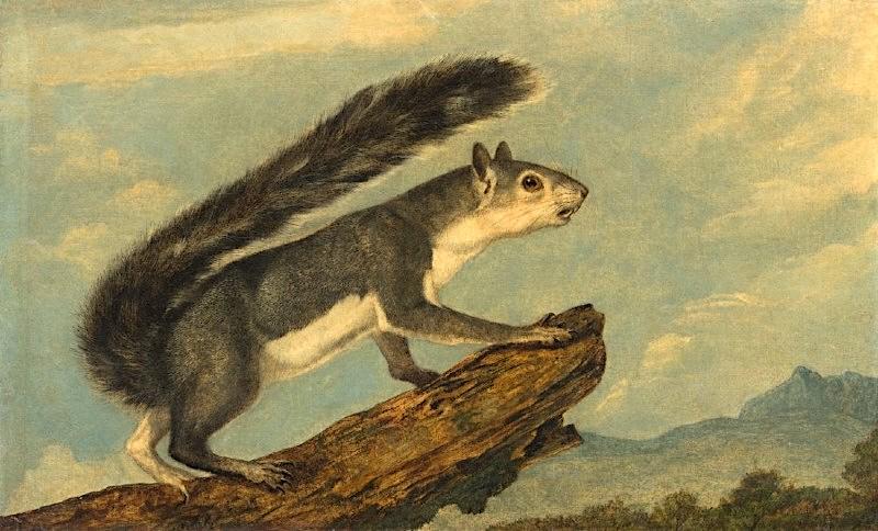 Audubon painting