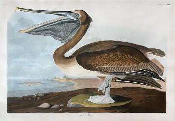 Audubon birds open Arader Galleries auction Jan. 23