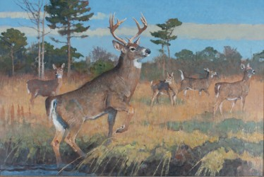 Wildlife images reign supreme at Copley's sale, Feb. 19-20