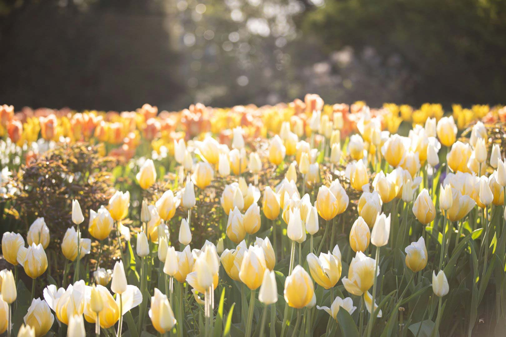 Spring Blooms returns this season at Newfields