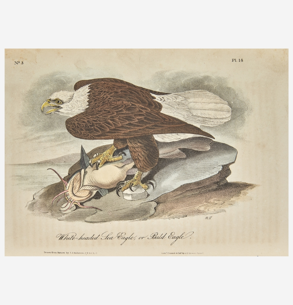 Plate from John James Audubon's 'Birds of America…' which sold for $37,800