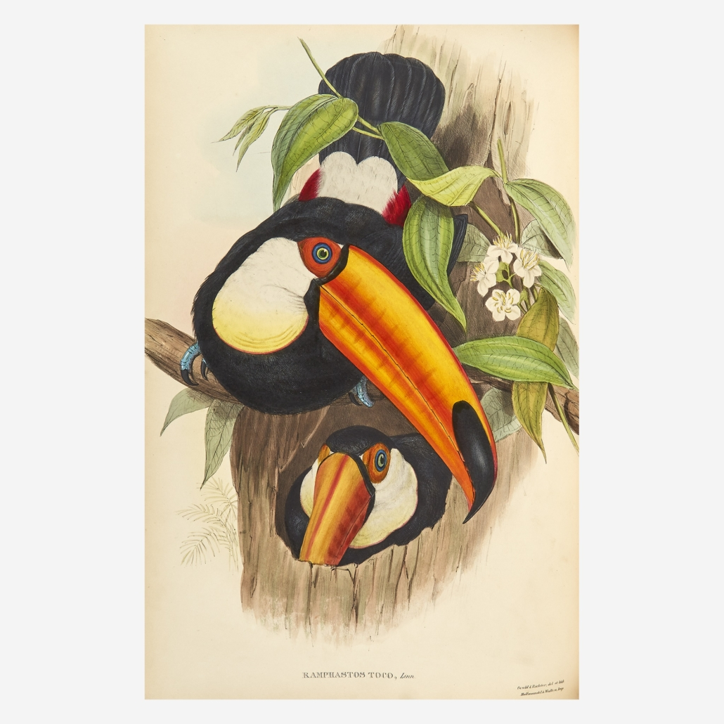 Plate from John Gould's 'Monograph of the Ramphastidae, or Family of Toucans,' which sold for $63,000
