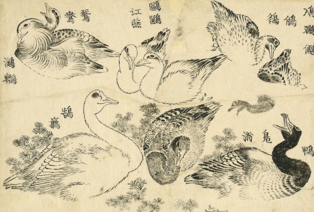 'Various aquatic birds,' Katsushika Hokusai (1760–1849), from 'Banmotsu ehon daizen zu (Illustrations for The Great Picture Book of Everything).' Block-ready drawing, ink on paper, Japan, 1820s–40s. Purchase funded by the Theresia Gerda Buch Bequest, in memory of her parents Rudolph and Julie Buch, with support from Art Fund. © The Trustees of the British Museum