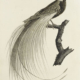 Audebert and Viellot's 'Oiseaux dores ou a reflets metalliques,' estimated at €4,500-€9,000