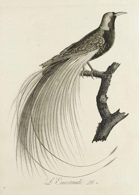 Jeschke Van Vliet's July 30-31 auction boasts fine & rare books