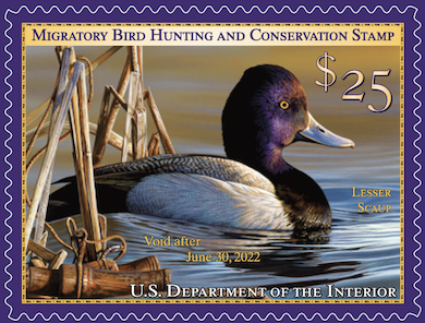 Hunting imagery no longer mandatory in US duck-stamp art contest